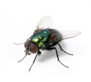 Elektrische Insektenvernichter