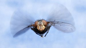 Elektrische Fliegenfänger – so funktionieren sie