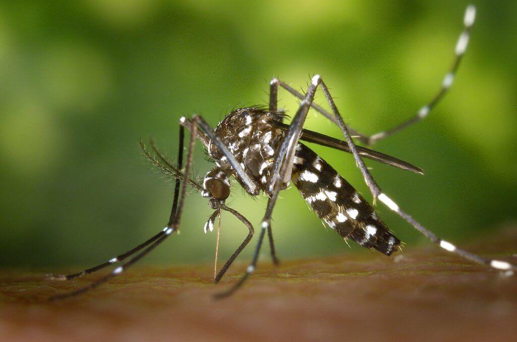 Schädlingsbekämpfung: Wespen, Gelsen, Mücken und Fliegen abwehren.