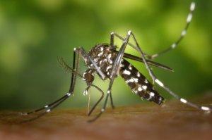 Schädlingsbekämpfung – Mücken, Gelsen, Fliegen und Wespen gezielt abwehren!