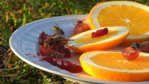 Elektrische Wespenfalle – so wird man Wespen wirklich los!