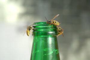 Lästige Insekten: Wespen, Fliegen, Motten, Mücken – so wirst du sie los!