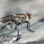 5 elektrischen Fliegenfallen im Überblick: Gastronomie, Restaurant, Café