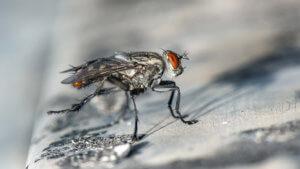 5 elektrische Fliegenfallen im Überblick: Gastro, Restaurant, Café