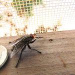 Was Sie bei Fliegenfallen für die Gastronomie beachten sollten