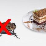 Fliegenfallen für Konditorei & Kaffee: Warum die Klebefallen perfekt sind