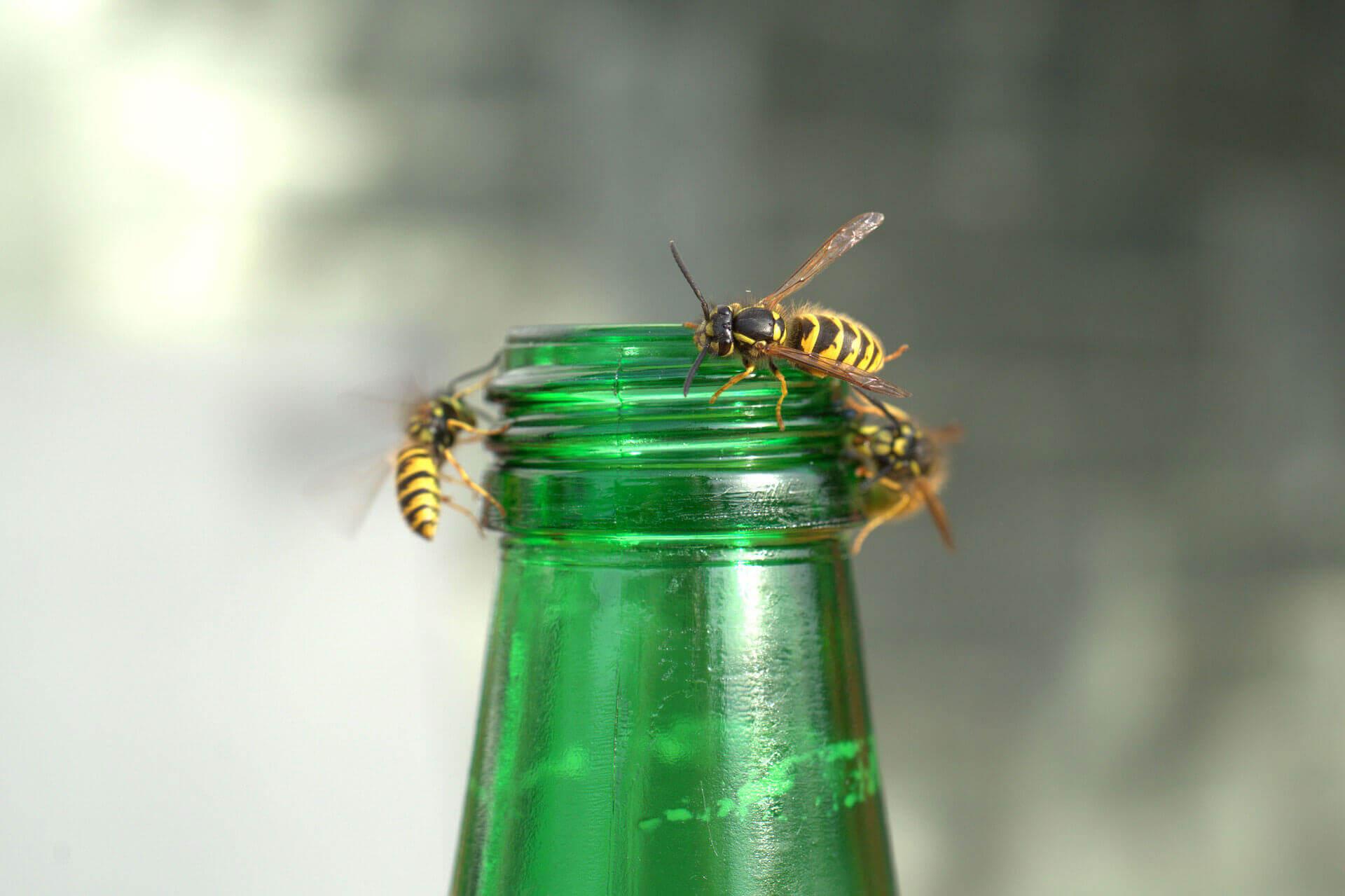 Fliegenfallen Gastronomie