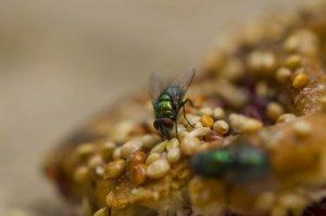 Die Vorteile einer Fliegenfalle in der Gastronomie