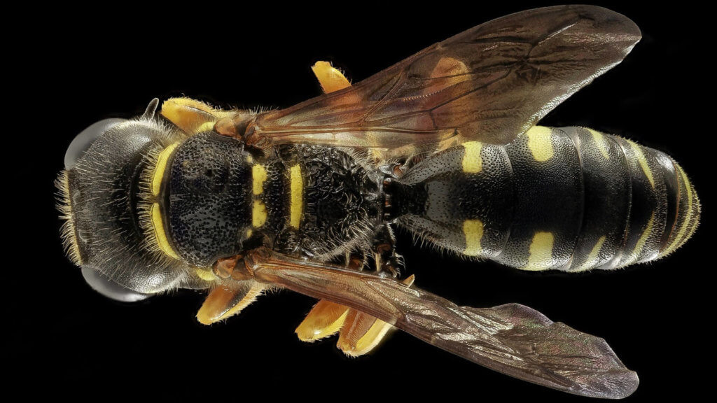 Schädlingsbekämpfung: Was tun wenn Schädlinge angreifen?