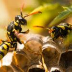 Schädlingsbekämpfung für Gastronomie & Hotellerie: Sortiment zum B2B Preis